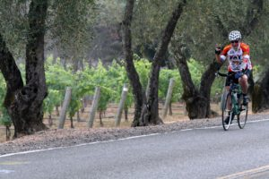 Cycling among the vineyards
